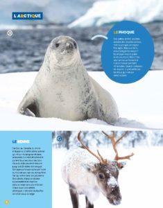 Animaux arctique