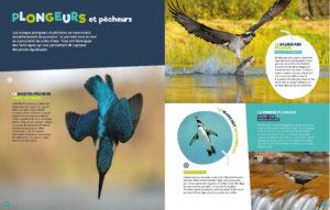 oiseaux-plongeurs-pêcheurs