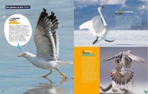 oiseaux-plumes et ailes